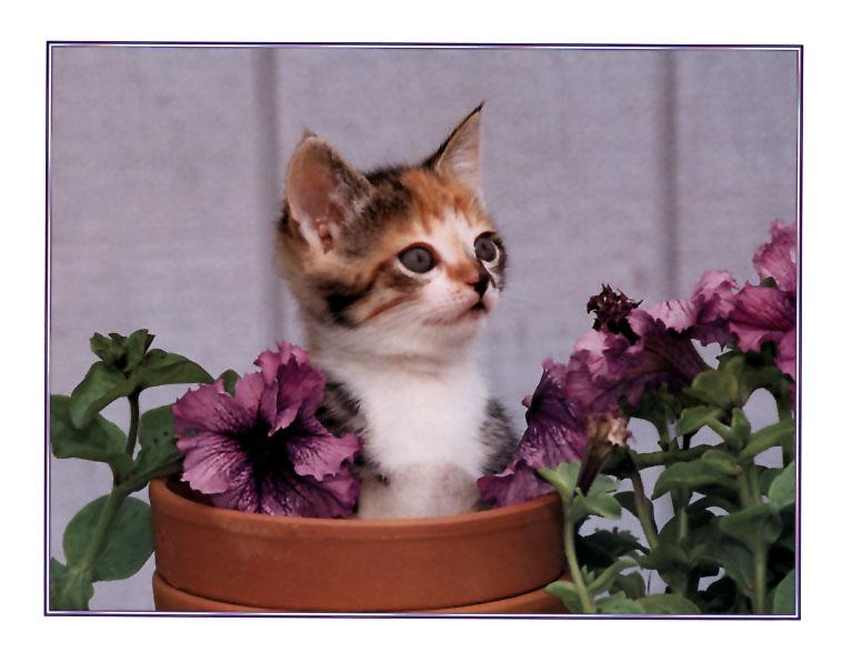 ksw-april99-Kitten.jpg